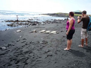 Wasserschildkröten am schwarzen Strand